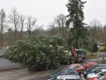 Vánoční strom pro Písek